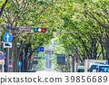 [가나가와 현] 가로수 길 39856689