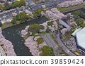 kudan, cherry blossom, cherry tree 39859424