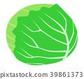 甘藍 包菜 椰菜 39861373