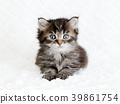 새끼 고양이, 아기 고양이, 고양이 39861754