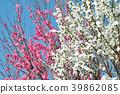 桃花(紅色和白色) 39862085