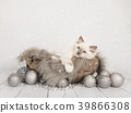 christmas card with rag doll kitten cat 39866308