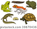 amphibian, reptile, set 39870436