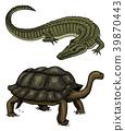 amphibian, reptile, turtle 39870443
