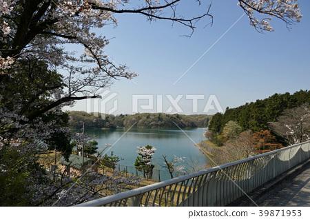 從多摩湖橋看到的多摩湖 39871953