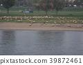 강, 강변, 강가 39872461