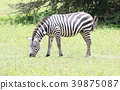 animal animals wild 39875087