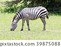animal animals wild 39875088