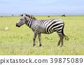 animal animals wild 39875089