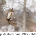 red squirrel on a cane holding 39879168