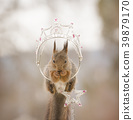 red squirrel  in a crown on an cane 39879170