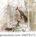 red squirrels on a cane with an crown 39879171