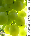 Close Up Macro of Ripe Grape Cluster on Vine 39880518