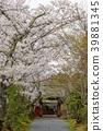 ทัศนียภาพ,ภูมิทัศน์,ประเทศญี่ปุ่น 39881345