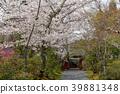 ทัศนียภาพ,ภูมิทัศน์,ประเทศญี่ปุ่น 39881348