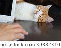 컴퓨터 너머로 じゃれる 차 흰색 고양이 39882310