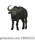 African buffalo wild animal vector Illustration on 39892033