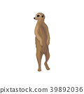 Meerkat wild african animal vector Illustration on 39892036