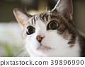 猫 猫咪 小猫 39896990