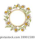 chamomile, camomile, frame 39901580