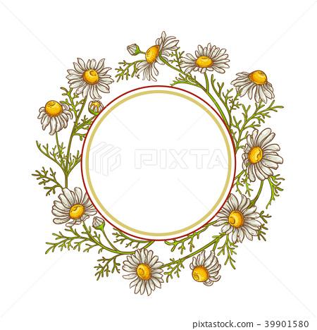 chamomile flower vector frame 39901580