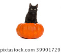 Young cute black cat in an orange pumpkin 39901729