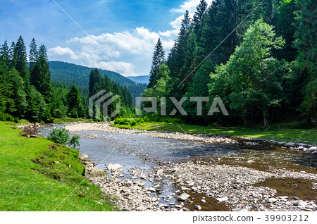 mountain river among the forest in summer 39903212