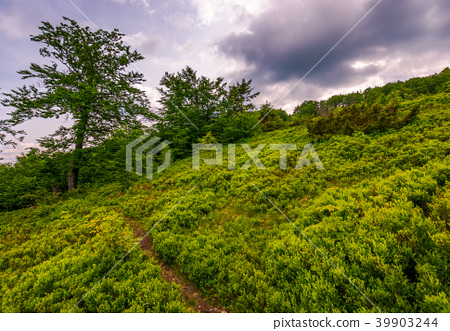 path uphill the grassy hillside in to the forest 39903244