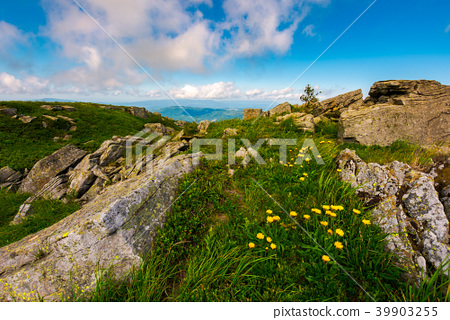 Dandelions among the rocks in Carpathian Alps 39903255
