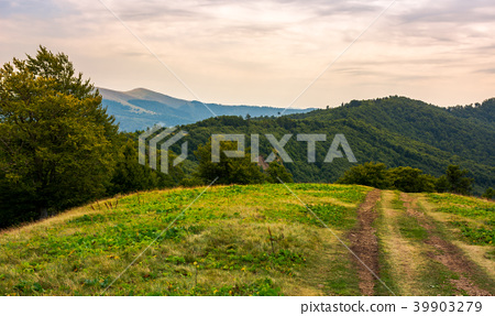 mountain road through hillside with forest 39903279