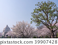 벚꽃길과 국회 의사당 39907428