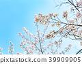 ทัศนียภาพ,ภูมิทัศน์,ประเทศญี่ปุ่น 39909905