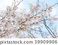 ทัศนียภาพ,ภูมิทัศน์,ประเทศญี่ปุ่น 39909906