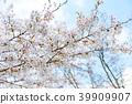 ทัศนียภาพ,ภูมิทัศน์,ประเทศญี่ปุ่น 39909907