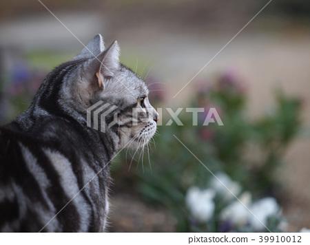 毛孩 貓 貓咪 39910012