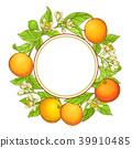 grapefruit vector frame 39910485