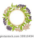 elderberry, flower, bloom 39910494