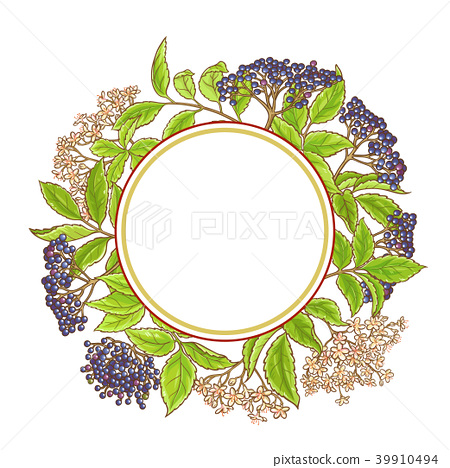elderberry branch vector pattern 39910494