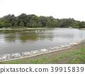 黑頭鷗在Inage海灘公園池塘 39915839