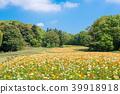 国家Musashi多小山森林公园冰岛罂粟 39918918