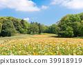 ฤดูใบไม้ผลิ,ทุ่งดอกไม้,สวน 39918919
