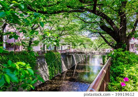 【東京都】目黒川 39919612