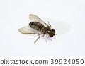 벌레, 곤충, 등에 39924050
