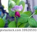 bloom, blossom, blossoms 39926593