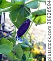 bean, beans, enclosure 39926594