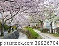 ฤดูใบไม้ผลิ,ดอกไม้,ดอกซากุระบาน 39926704