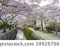 ฤดูใบไม้ผลิ,ดอกไม้,ดอกซากุระบาน 39926706