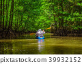 Kayaking in the mangrove jungle 39932152