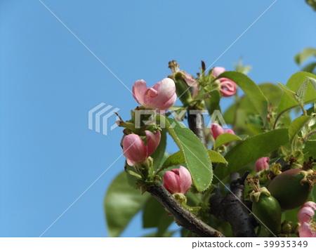Karin的粉紅色花朵即將上映 39935349