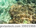 Clown fish and sea anemone 39935966